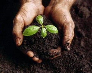 improve your soil - earth day - 4-17-14