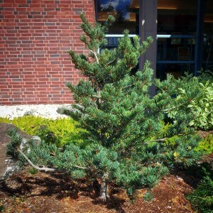 10-15-14 conifer fall b4