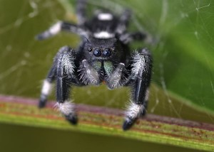 10-30-14 Jumping spider