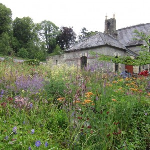 2015-7-31 Ireland garden with house behind